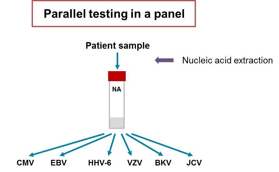 Testare patogenă paralela cu kiturile RealStar